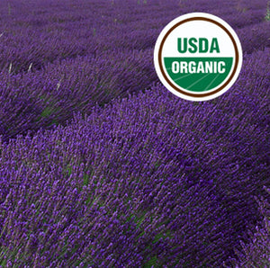 This Organic Lavender Oil for wholesale was grown in this certified organic field and distilled in our certified organic distillery.