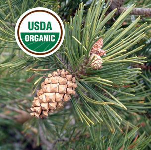 Pine Essential Oil USDA Organic for wholesale