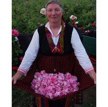 woman cropping Bulgarian  rose flowers