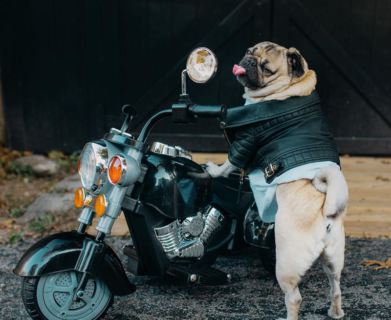 Going Deeper: with Doug the Pug