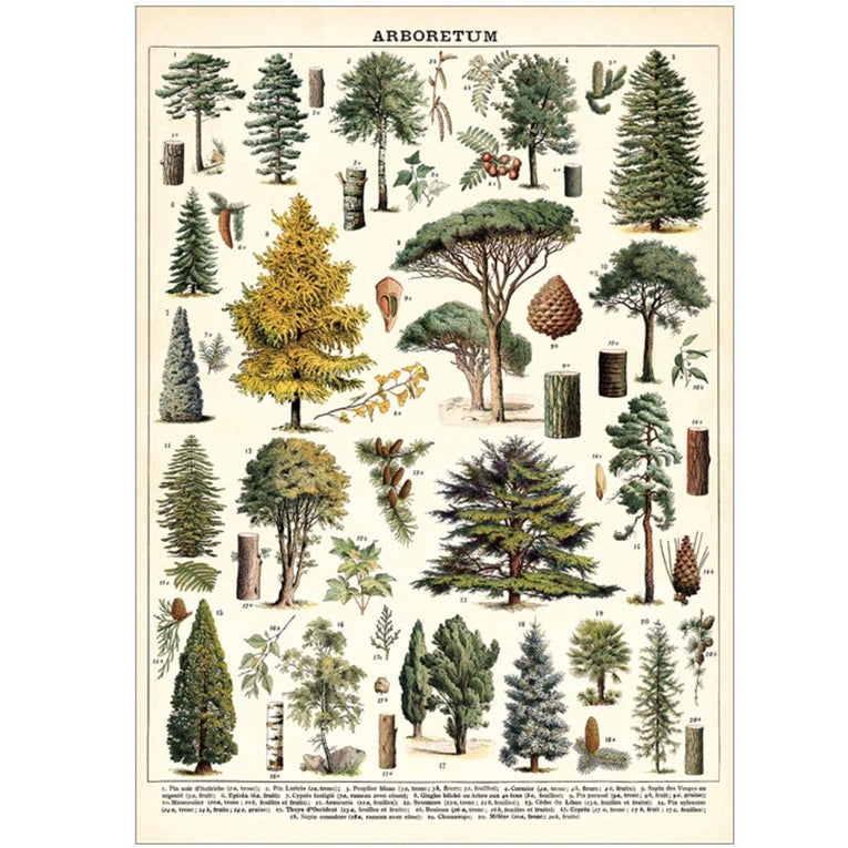 Arboretum Wrapping Paper and Poster