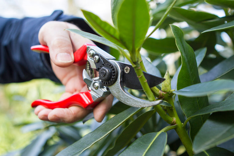 Professional Left Hand Pruner