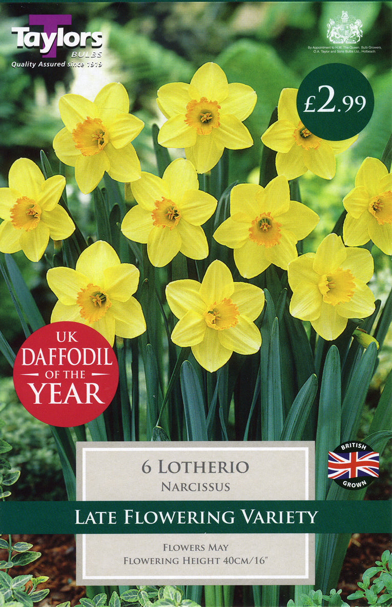 Lotherio Narcissus Bulbs