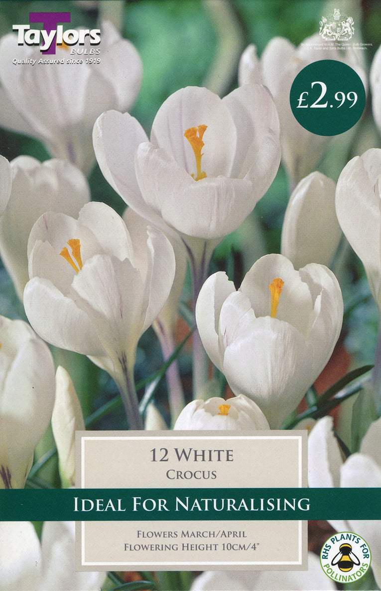White Crocus Bulbs