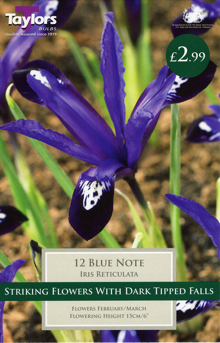 Blue Note Iris Reticulata Bulbs