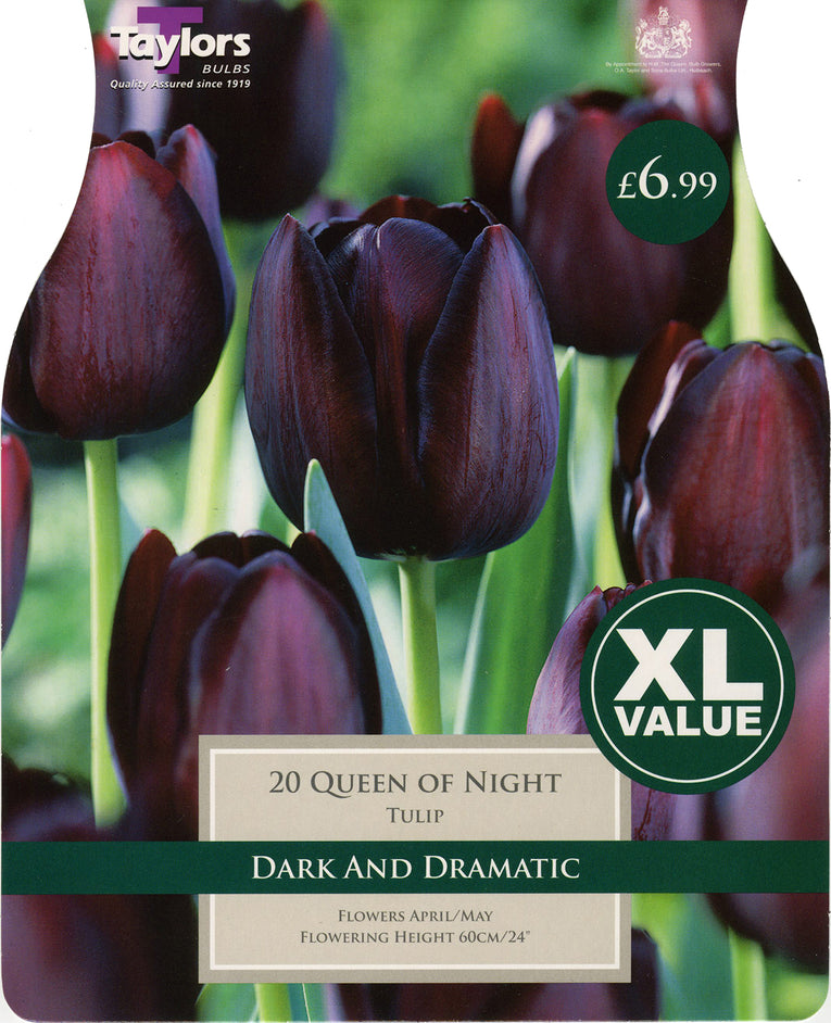 Queen of Night Tulip Bulbs