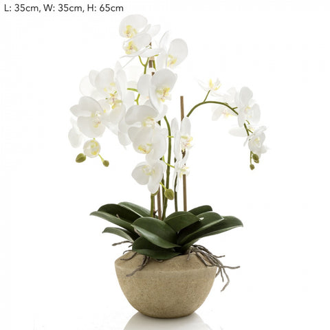 Orchid in Stone Pot