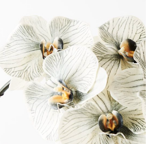 Orchid - Philaenopsis- Grey | Fauxliage