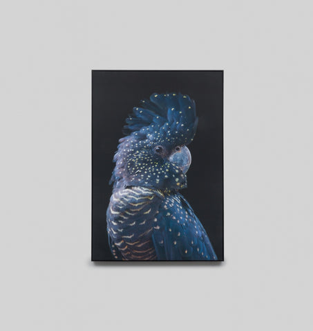 Framed Canvas Art | Black Cockatoo