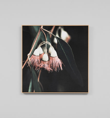 Framed Canvas Art | BLUEGUM TREE