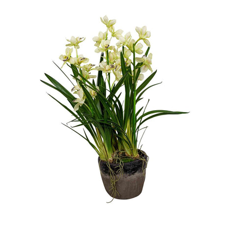 large cymbidium orchid in grey pot at Unearthed Homewares