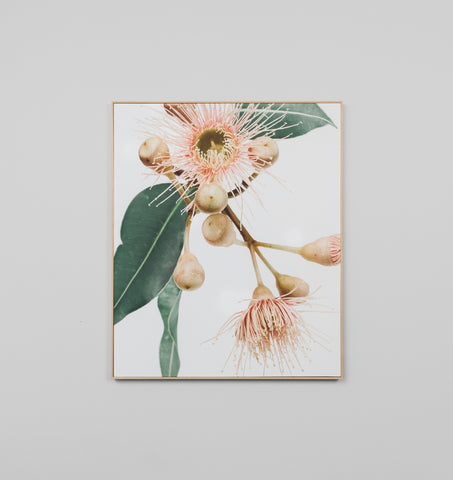 Framed Canvas Art | Eucalyptus 1