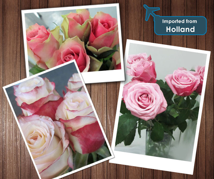 Imported Fresh Flower From Holland
