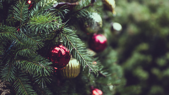 Where To Buy Christmas Trees in Malaysia