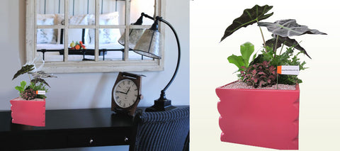 Plant Arrangement with Pink Triangle Pot