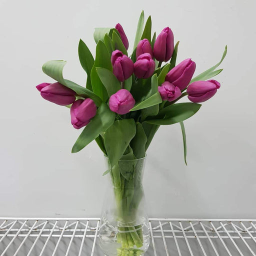Tulip in Vase - Shocking Pink