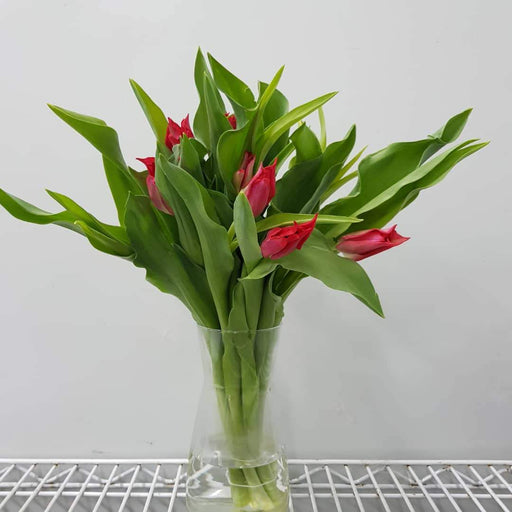 Tulip in Vase - Red