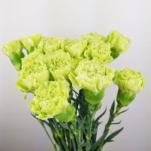 Carnations (Local) - Green