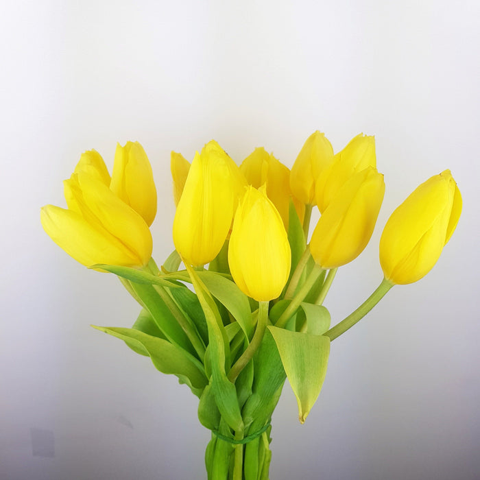 Tulip (imported) - Yellow