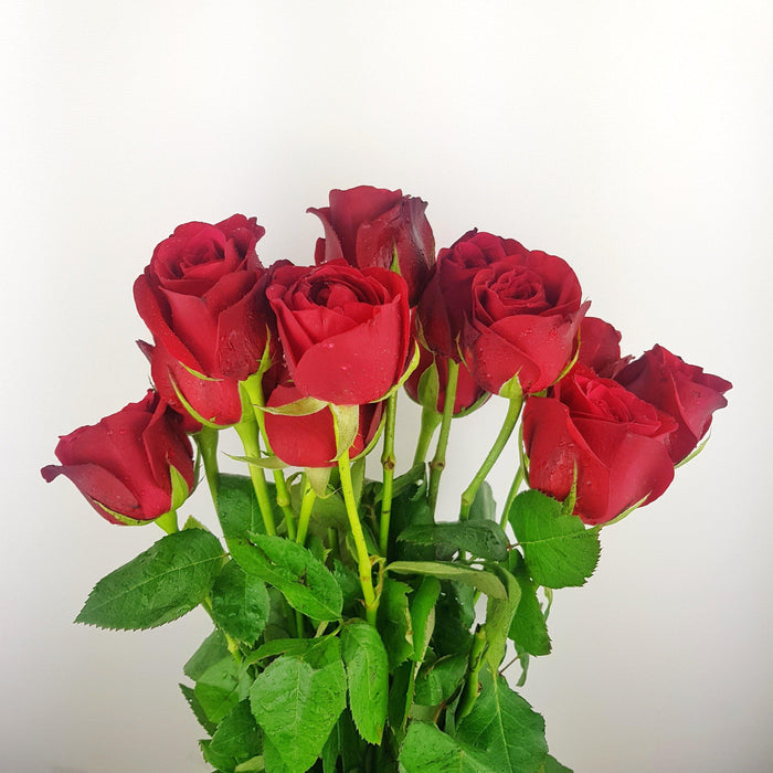 Rose (In) Bouquet (Imported) - Red