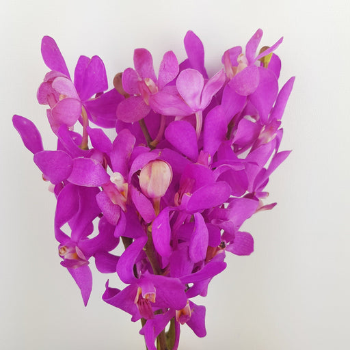 Orchid (Medium) - Purple