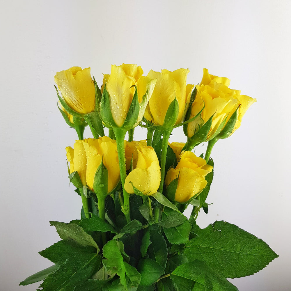 Rose (Imported) - Yellow
