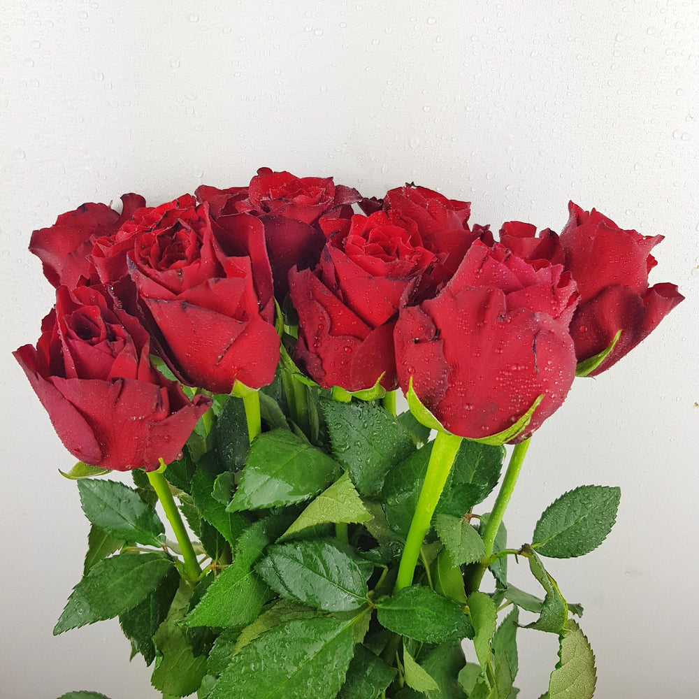 Rose (Imported) - Red