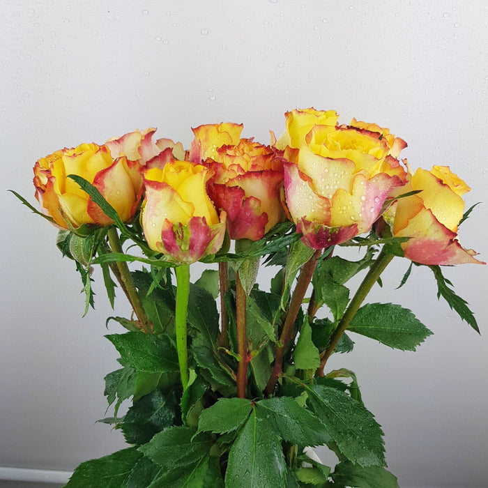 Rose (Imported) - 2 Tone Orange