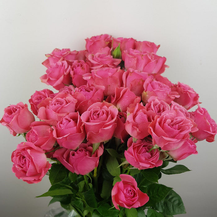 Spray Rose (Imported) - Sweet Pink