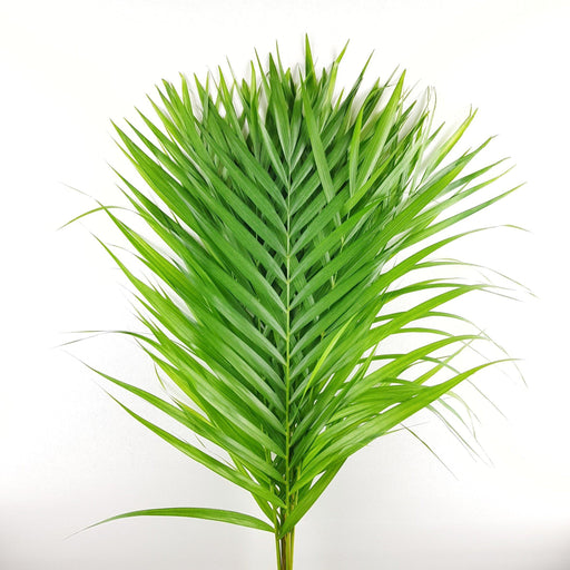 2 Bundle Palm Leaf (Local)