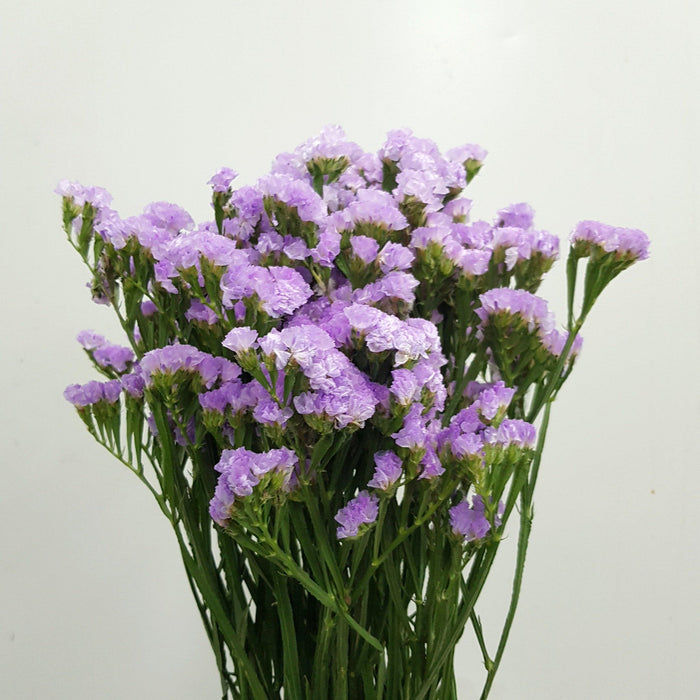 Statice (Imported) - Lilac