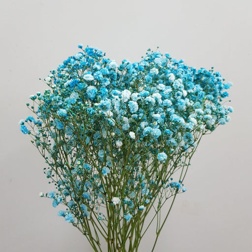 2 Bundle Baby Breath (Imported) - Blue