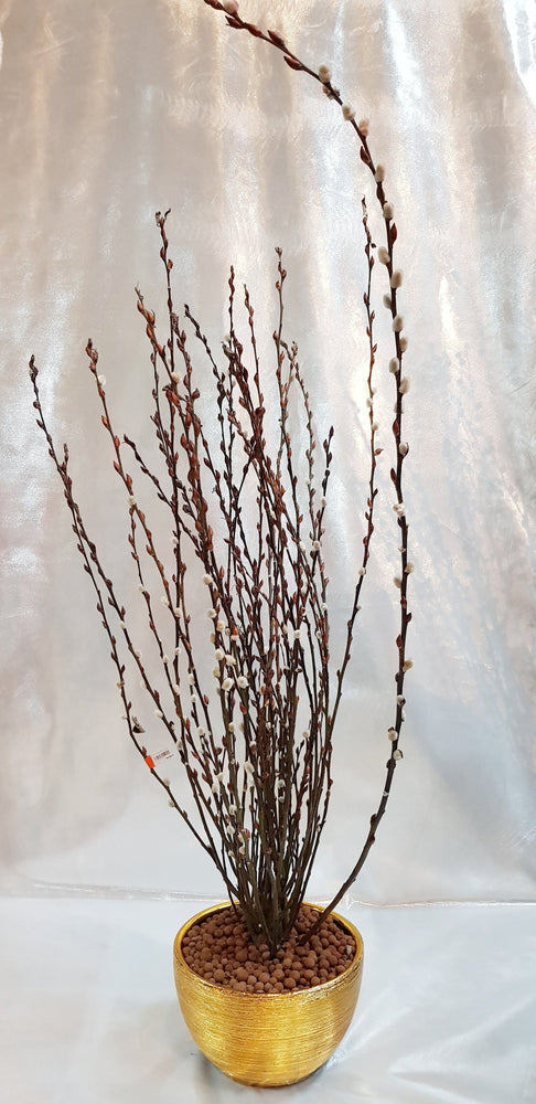 Pot Pussy Willow Arrangement 5