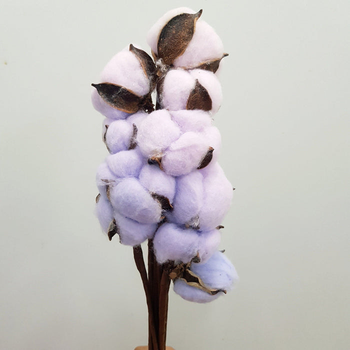 Cotton Flower - Purple