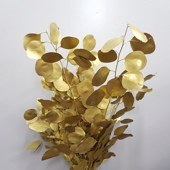 Painted Eucalyptus Populus - Gold