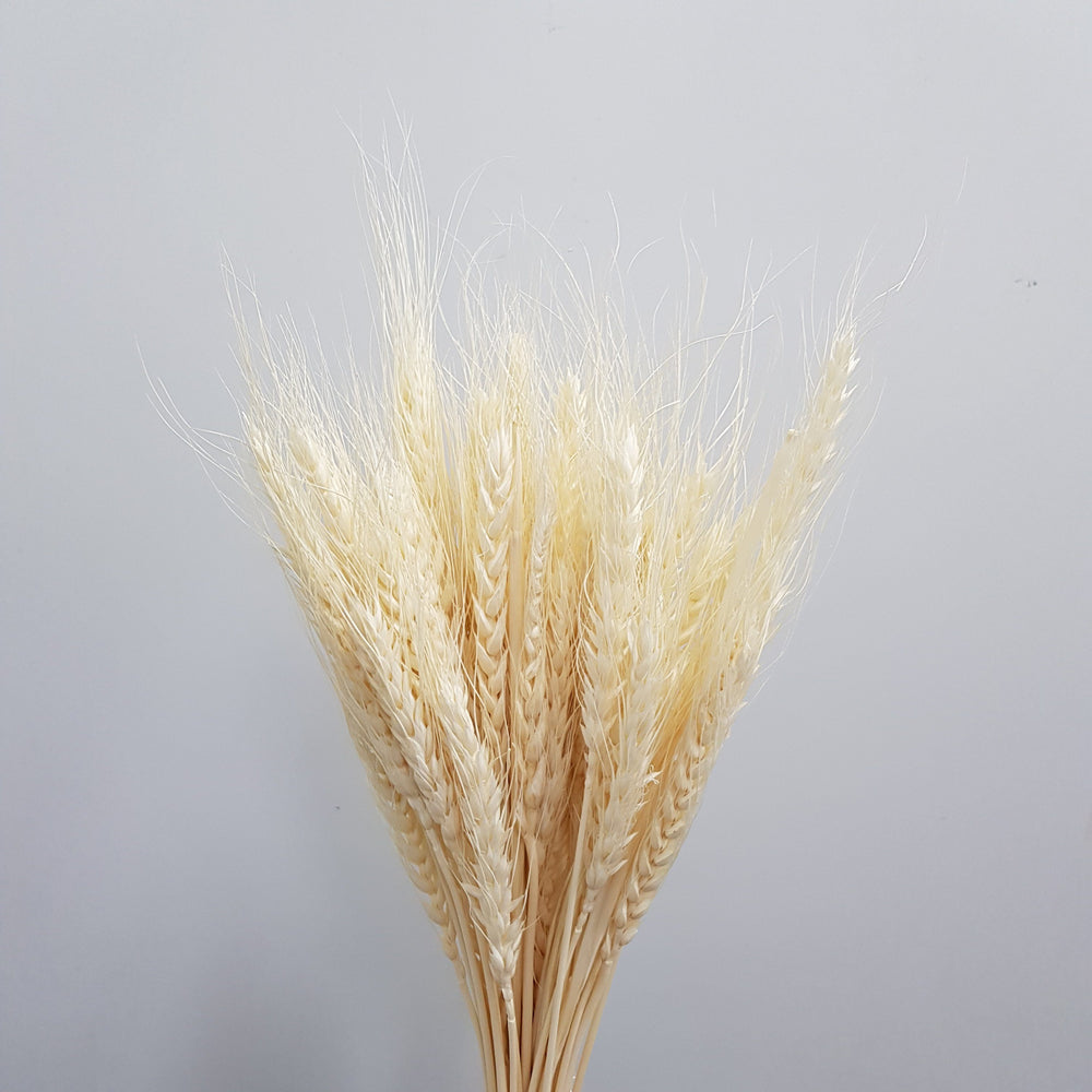 Wheat - White