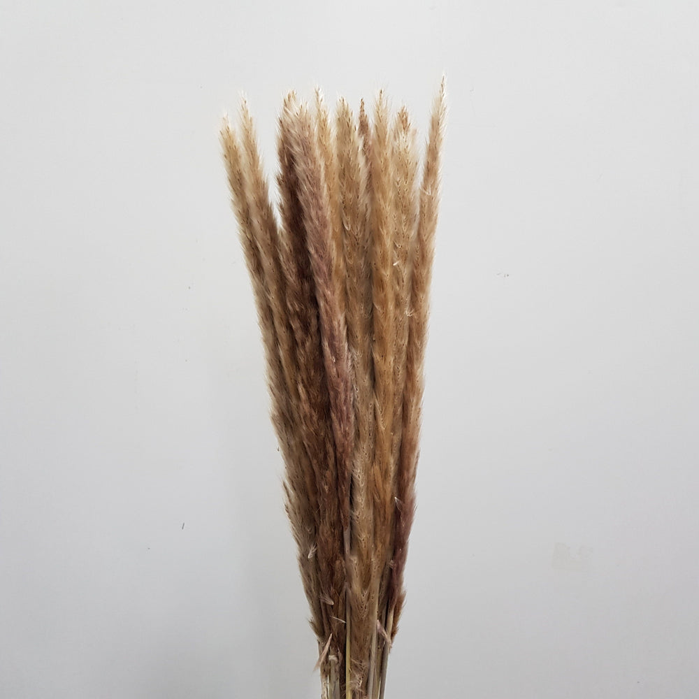 Reed Flower - Brown