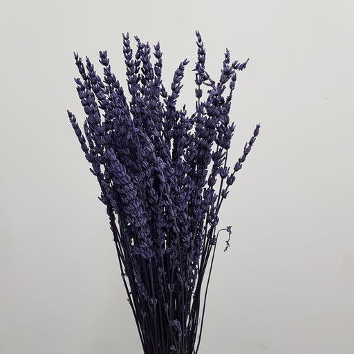 Lavender - Dark Purple