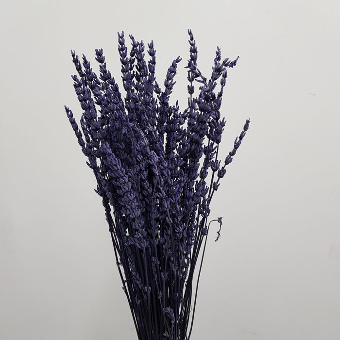 Dry Lavender (CH) Mix - Dark Purple