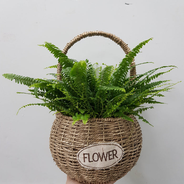 Boston Fern Basket Arrangement