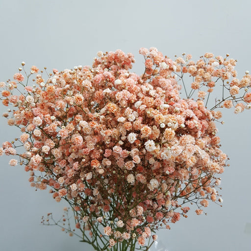 Baby Breath (Imported) - Orange