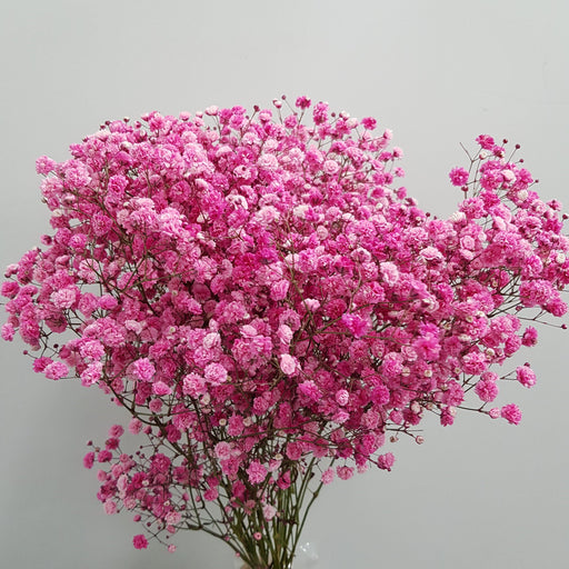 Baby Breath (Imported) - Pink