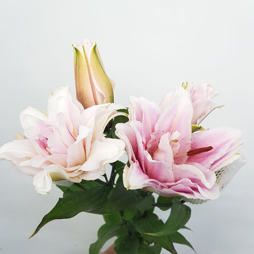 Rose Lily (Imported) - Light Pink