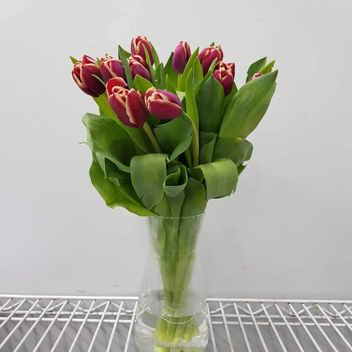 Tulip in Vase - 2 Tone Orange