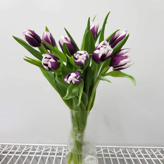 Tulip in Vase - 2 Tone Purple