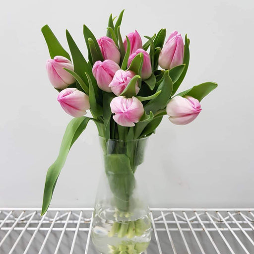 Tulip in Vase - Light Pink