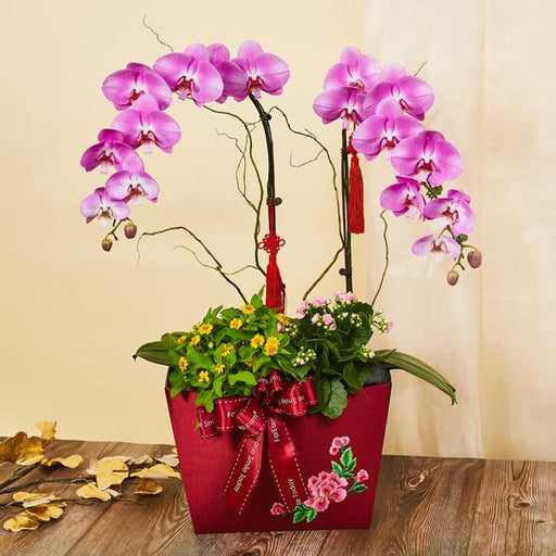 Phalaenopsis and Kalanchoe Arrangement - Floral Blessings (MYCTD65)