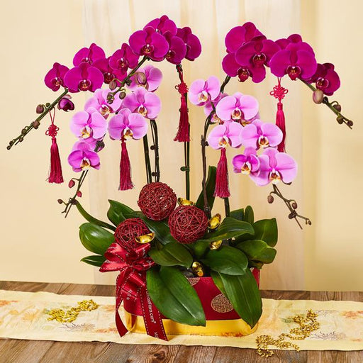 Phalaenopsis Arrangement - Prosperous New Year (MYCTD68)