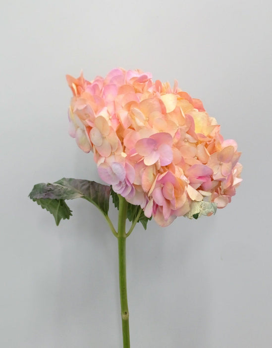 Hydrangea (Imported) - Light Pink Marsmallow
