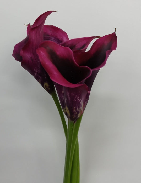 Calla Lily Rudolph (Imported) - Burgundy